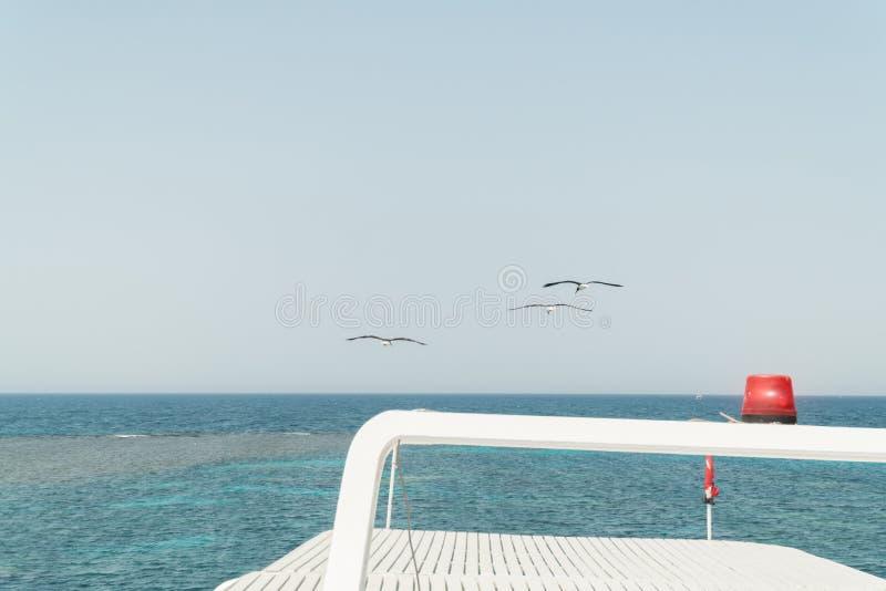 在游艇的盘旋的鸥 红海的看法 免版税库存图片