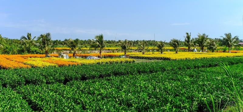 在湄公河三角洲的花田,越南 库存照片