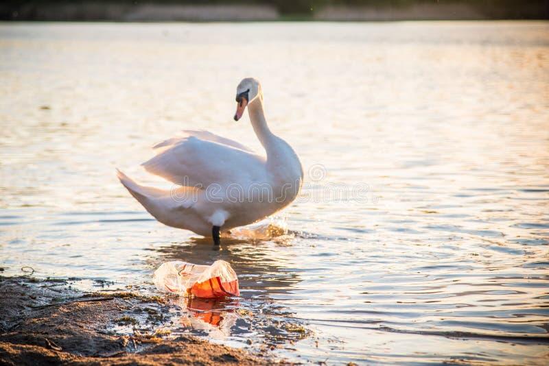 在湖和野生鸟的塑料污染 免版税库存图片