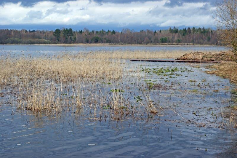在湖塞利格的春天 免版税库存图片