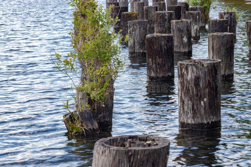 在湖外面的老船坞打桩 免版税库存照片
