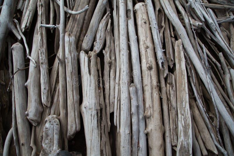在湖岸的漂流木头 库存照片
