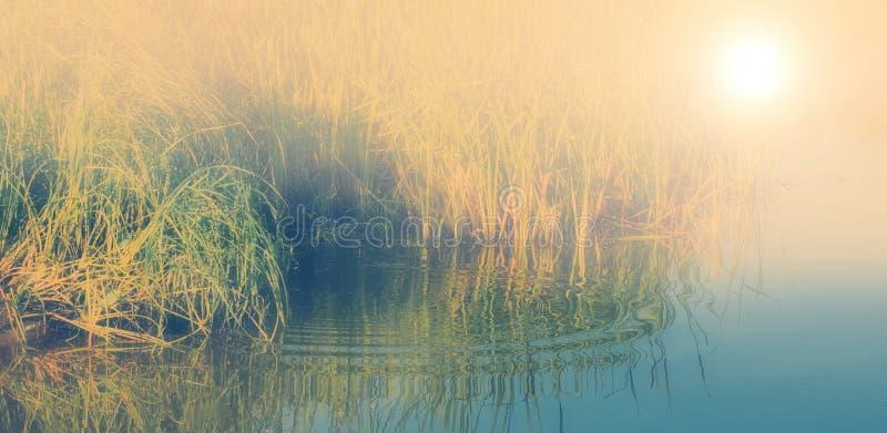 在湖或河水的有薄雾的早晨用茅草盖薹太阳上升 免版税库存照片