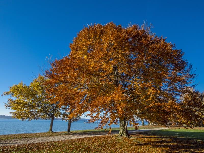 在湖施塔恩贝格,巴伐利亚,德国的秋天 免版税库存照片