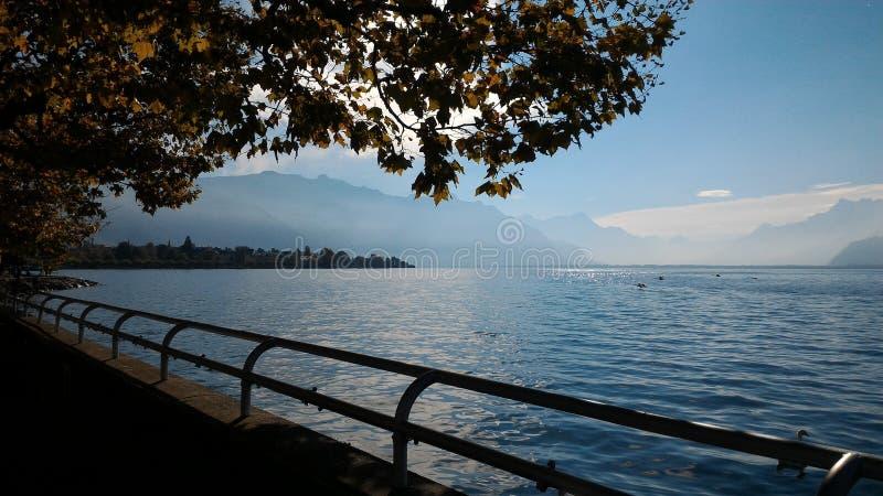 在湖旁边的树有好的看法 库存照片