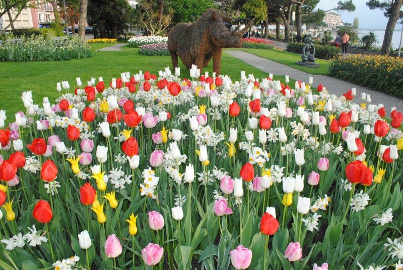 在湖旁边的郁金香庭院 库存图片