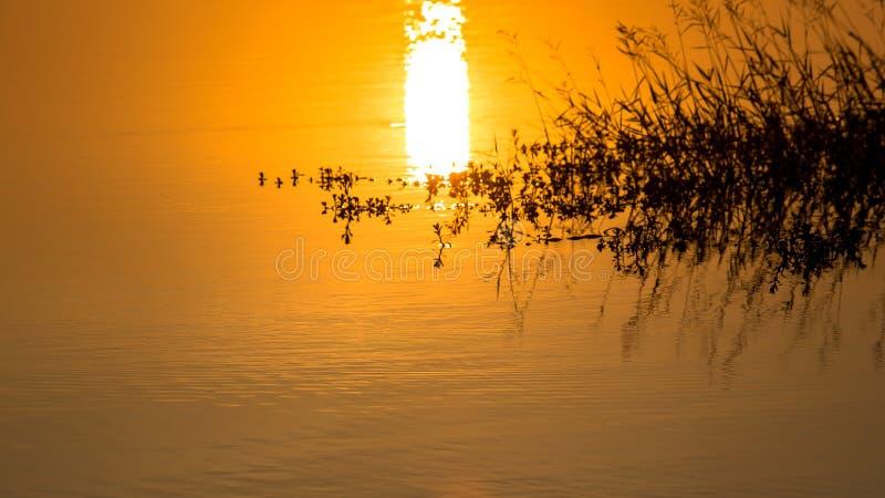 在湖水的日落与草花 库存照片