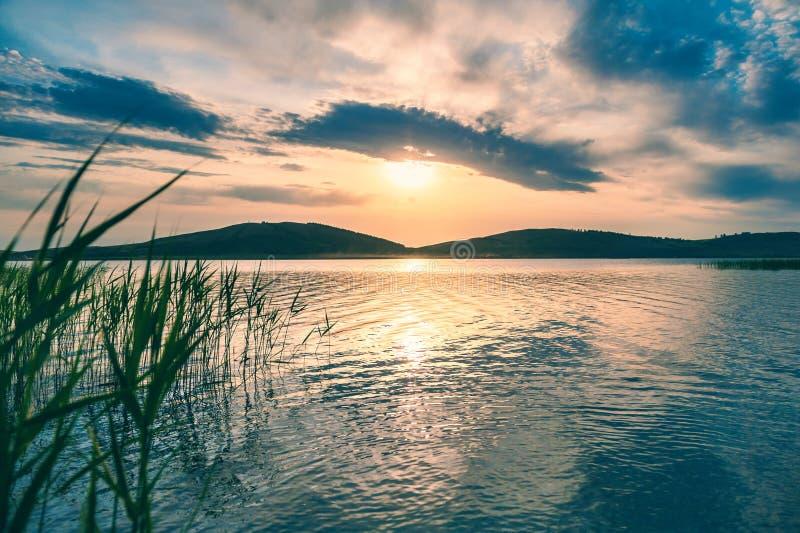 在湖海岸的藤茎日落的 库存图片