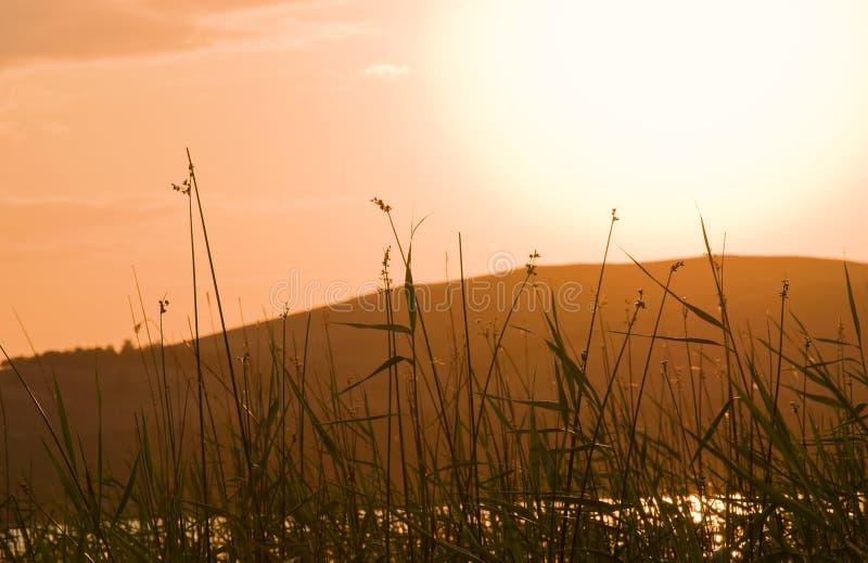 在湖海岸的藤茎日落的 库存照片