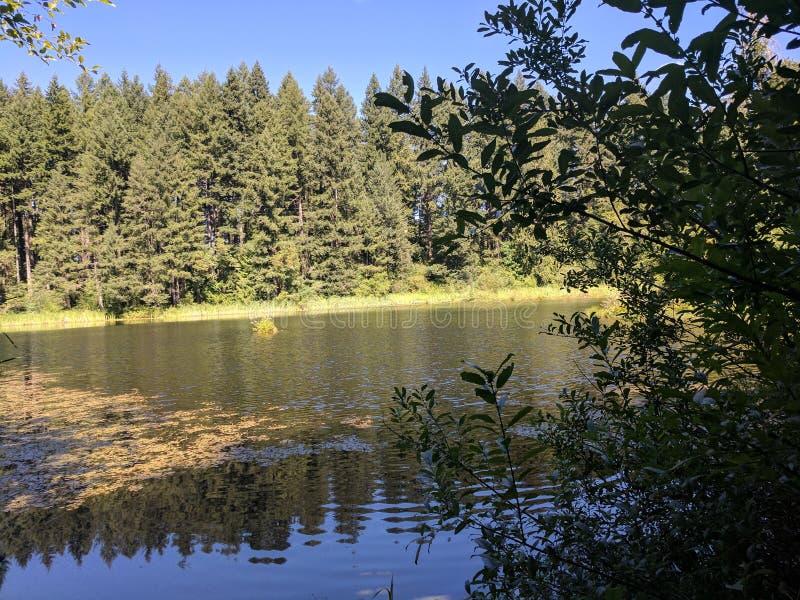 在湖的一日 免版税库存照片