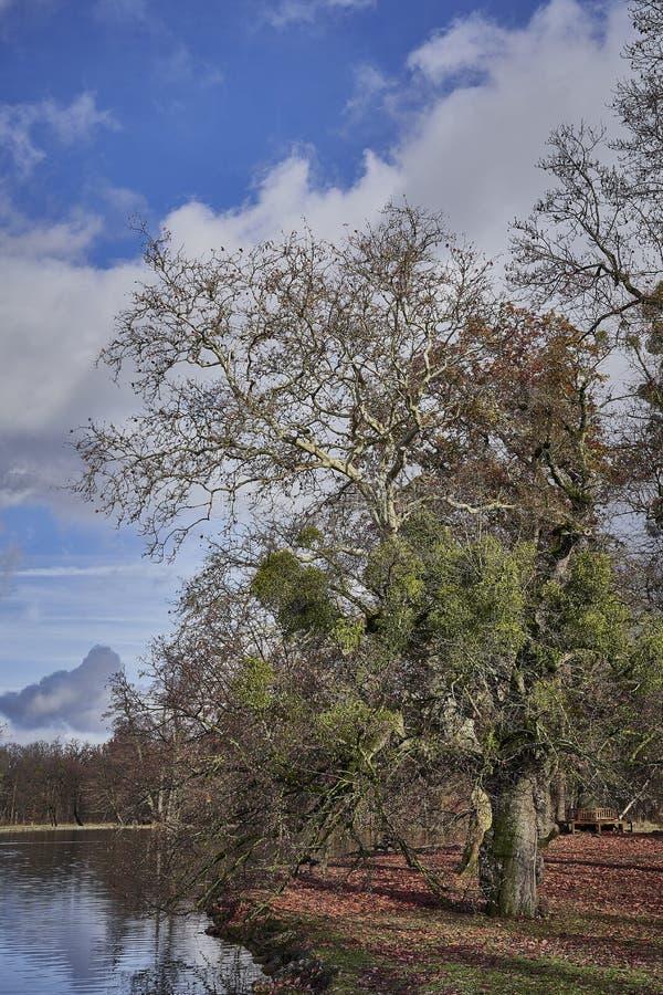 在湖的一棵树在秋天,反对伟大的天空,Nymphenburg城堡公园 免版税库存照片