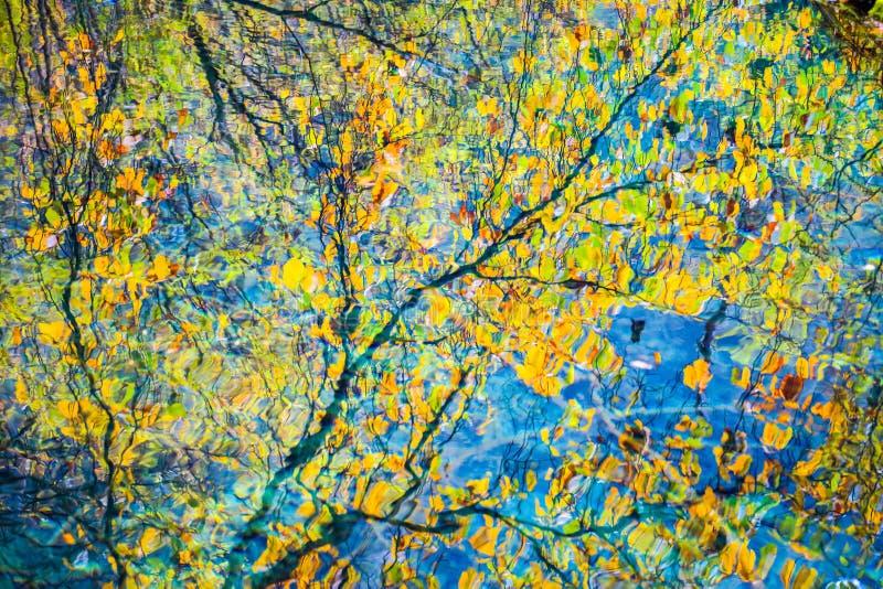 在湖的五颜六色的秋天 免版税库存照片
