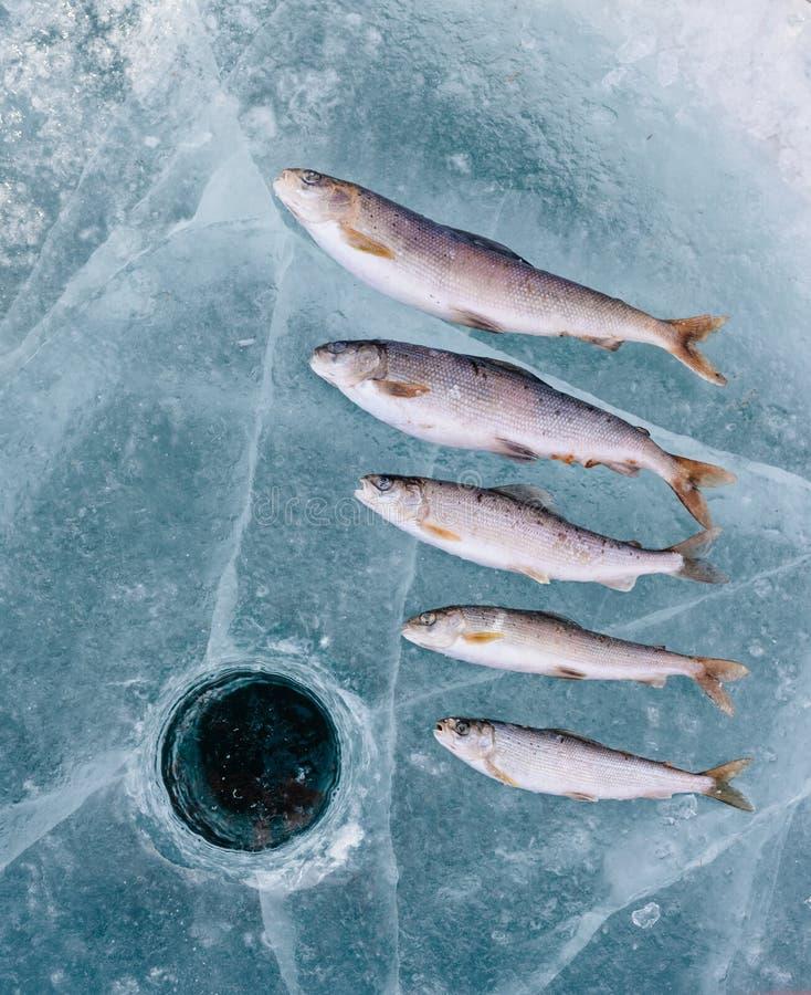 在湖的冬天捕鱼 免版税库存图片