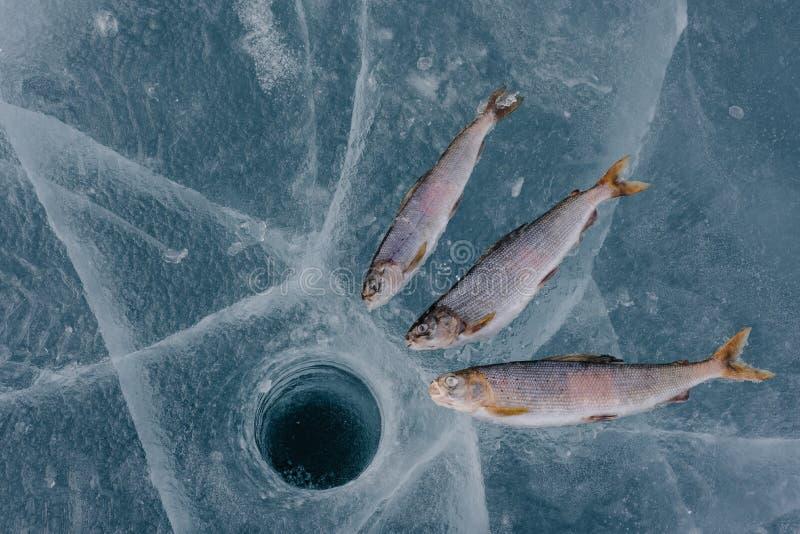 在湖的冬天捕鱼 库存图片