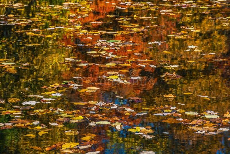 在湖的叶子 库存照片