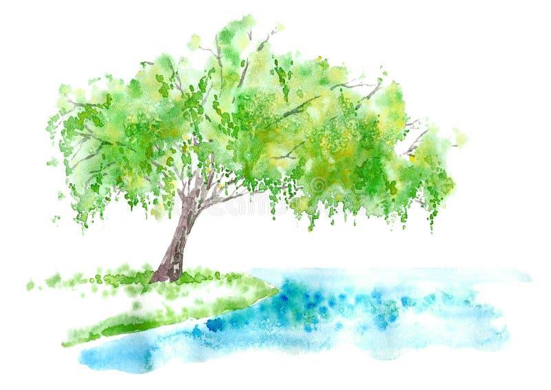 在湖的垂柳 夏天 库存例证