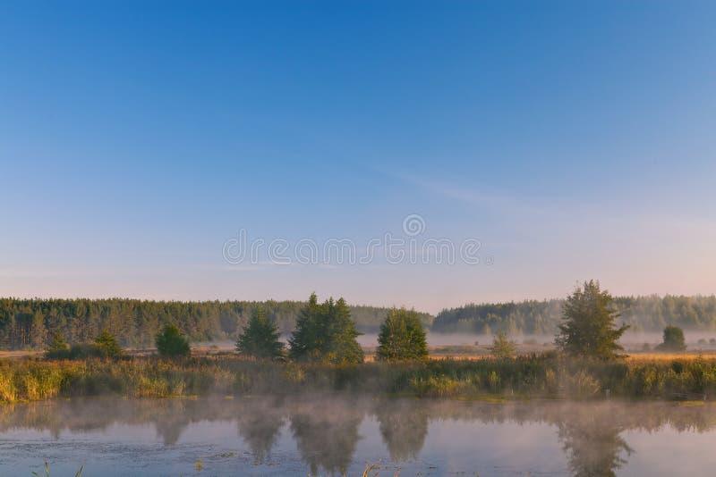 在湖的早晨在森林 库存图片