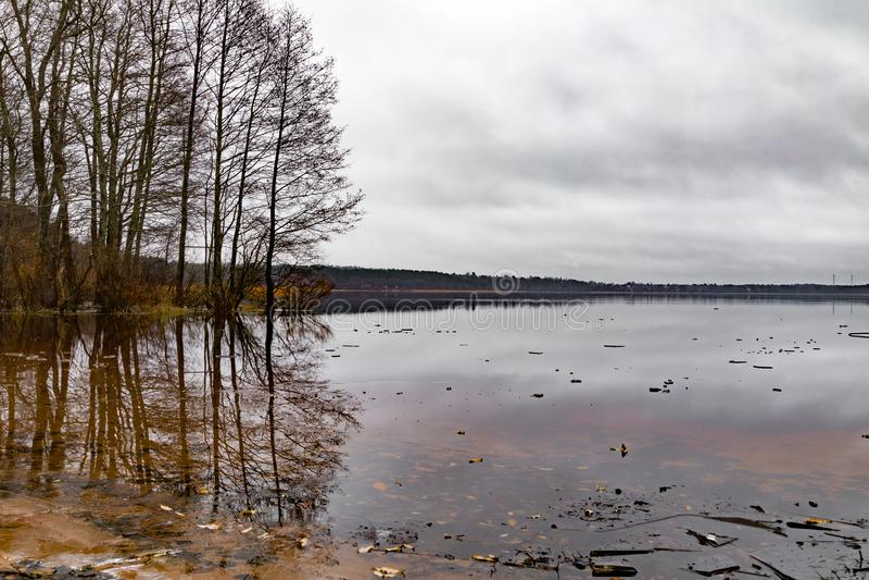 在湖的树 免版税库存图片