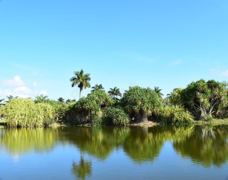 在湖的棕榈树在佛罗里达停放 库存图片