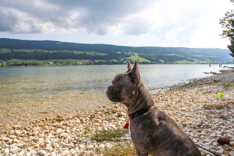在湖的狗 Lac在瑞士阿尔卑斯的de Joux 免版税库存图片