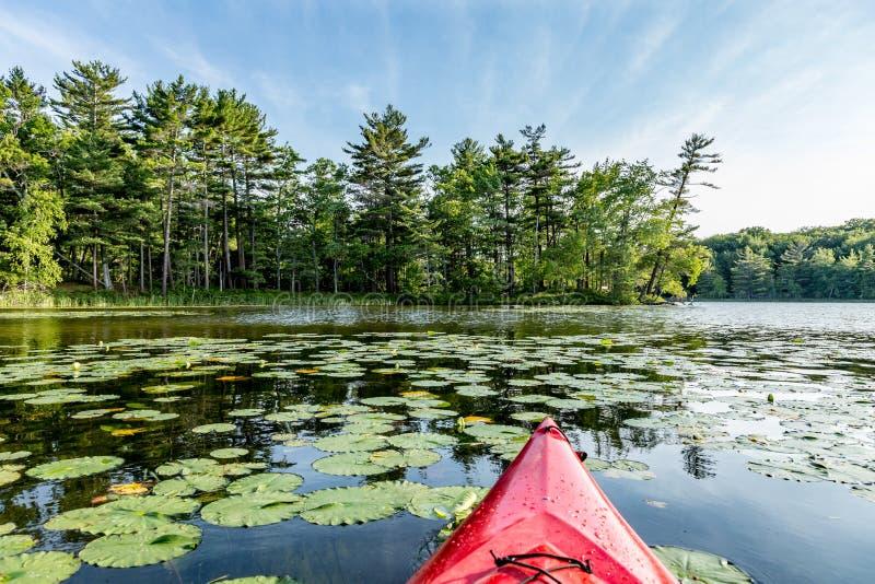 在湖的皮船有睡莲叶的 库存图片