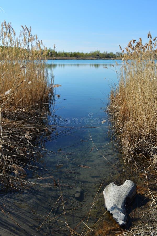 在湖的看法有大海的通过纸莎草丛林  平静的风景在春日 库存图片