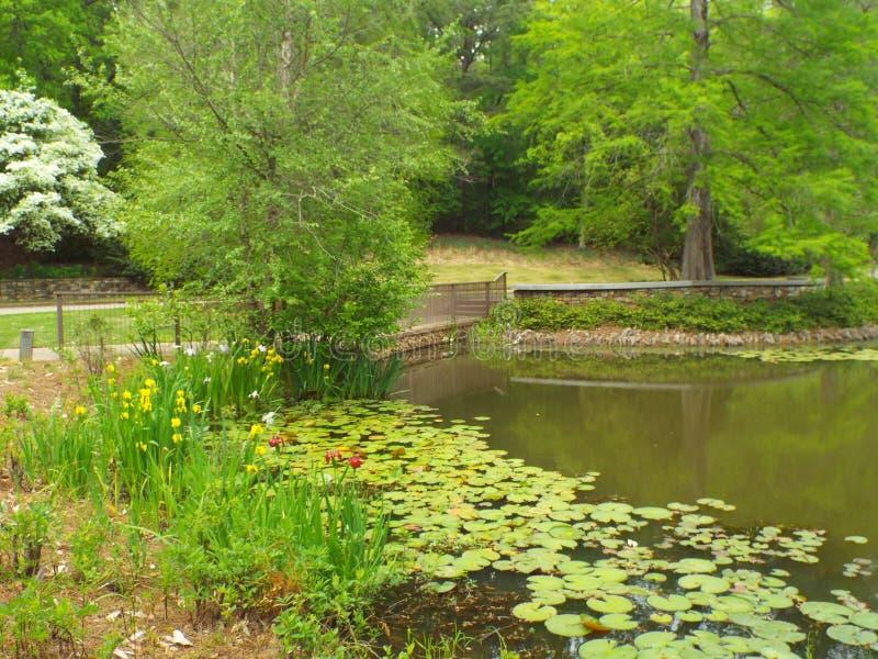 在湖的睡莲叶 免版税库存照片