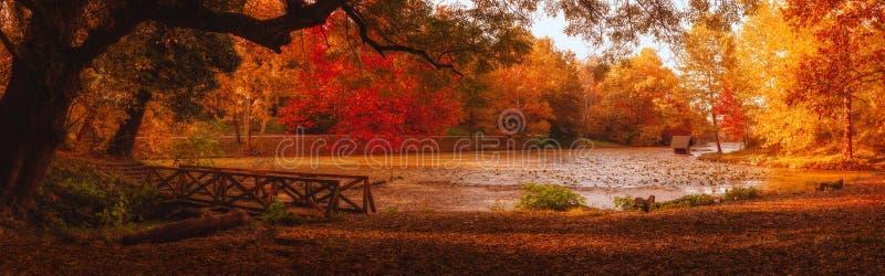 在湖的秋天场面在公园 库存图片