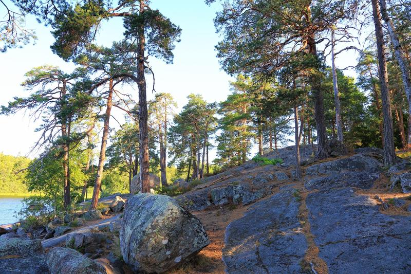 在湖的美丽的景色通过在岩石上面的绿色高大的树木  华美的自然风景背景 瑞典 库存照片