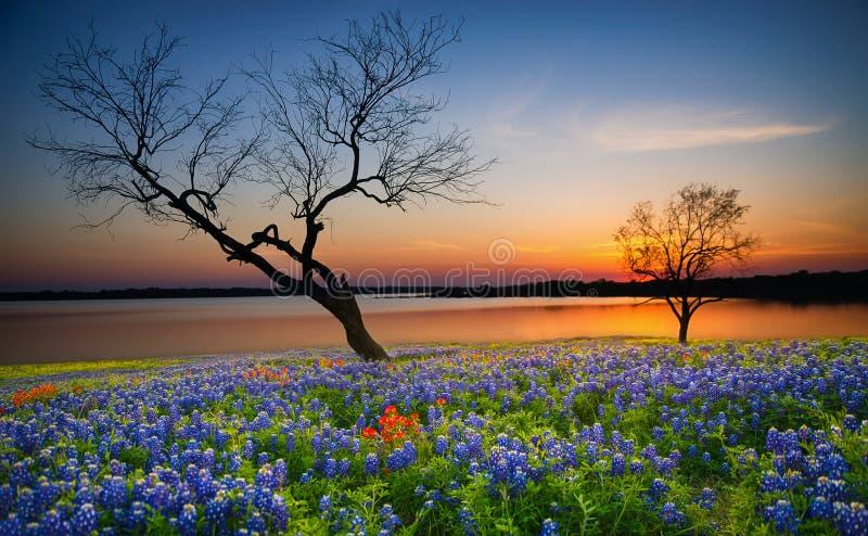 在湖的美好的得克萨斯春天日落 库存照片
