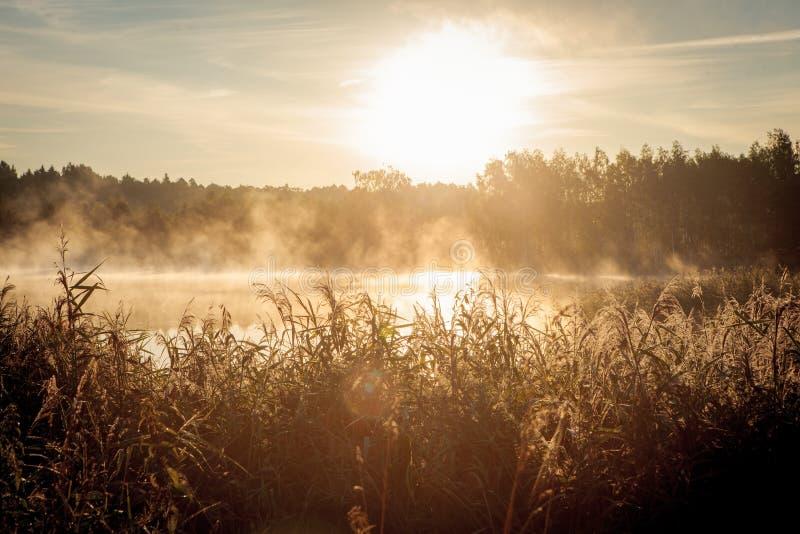 在湖的美好的有薄雾的日出 库存照片