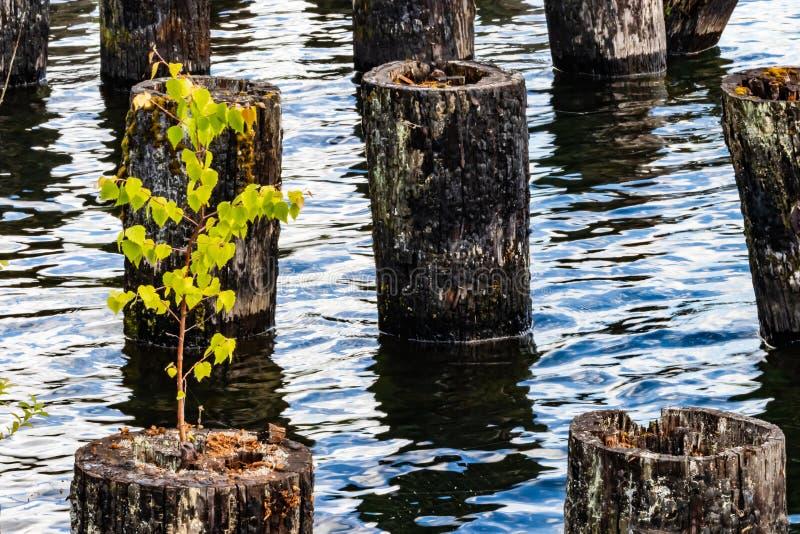在湖的船坞打桩 免版税库存照片
