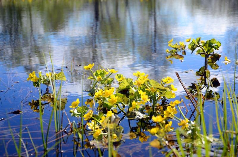 在湖的花 库存照片