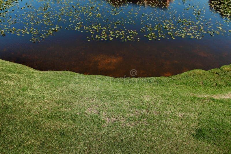 在湖的荷花 库存照片