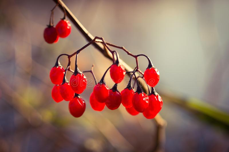 在湖的莓果在11月 库存照片