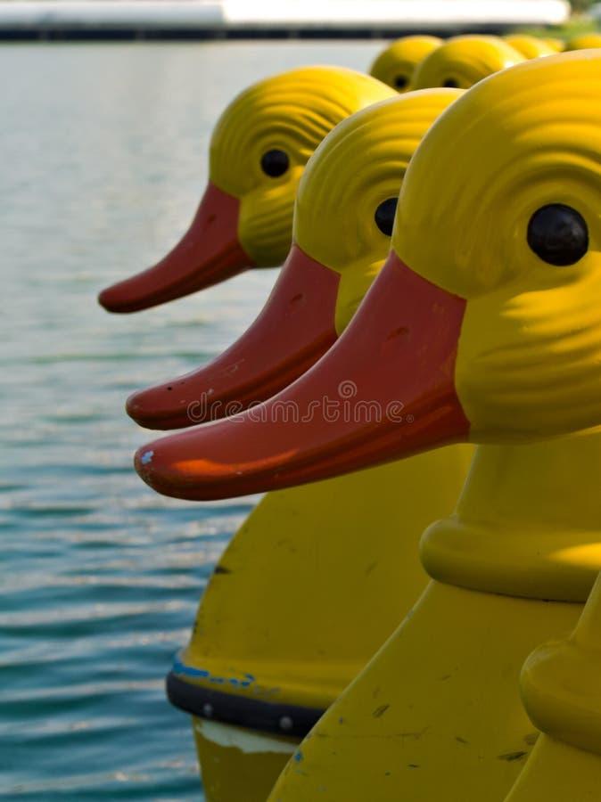 在湖的黄色水自行车鸭子 库存照片