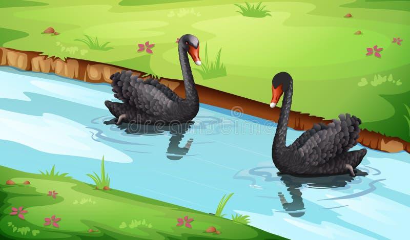在湖的黑天鹅 向量例证