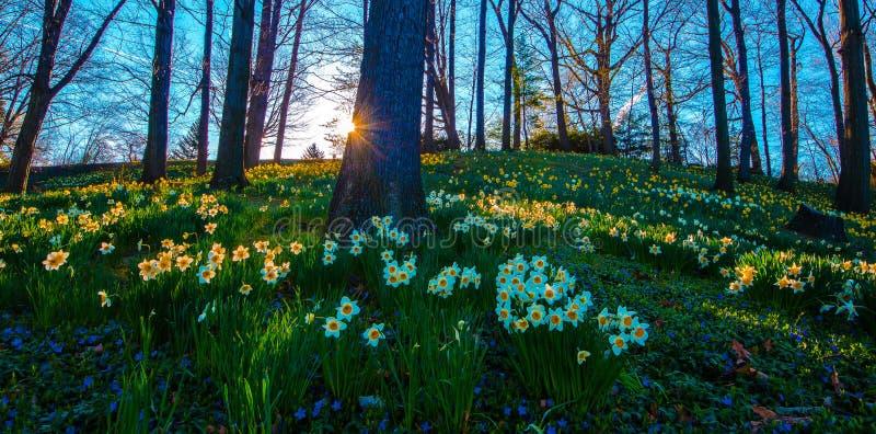 在湖视图公墓,克利夫兰,俄亥俄的金黄光 免版税图库摄影