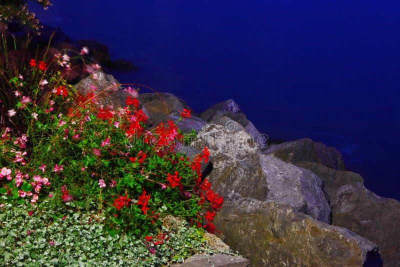 在湖边的花在蒙特勒夜 库存图片