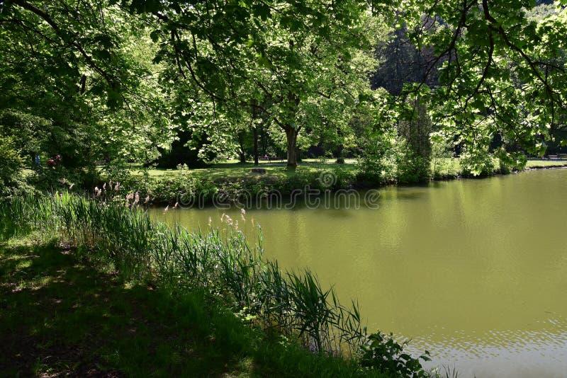 在湖边缘 免版税图库摄影