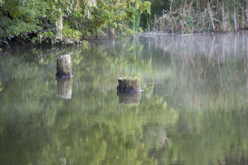 在湖里面的美丽的下落的树,树桩在水,沼泽风景中在夏天 库存图片