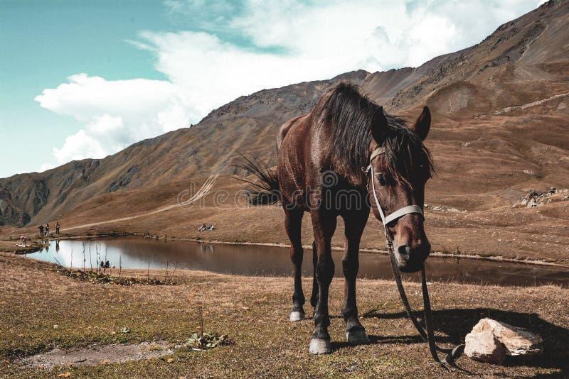 在湖附近的一匹孤独的马 免版税库存图片