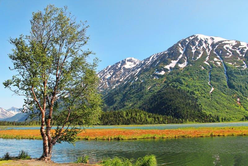 在湖附近的唯一树 免版税图库摄影