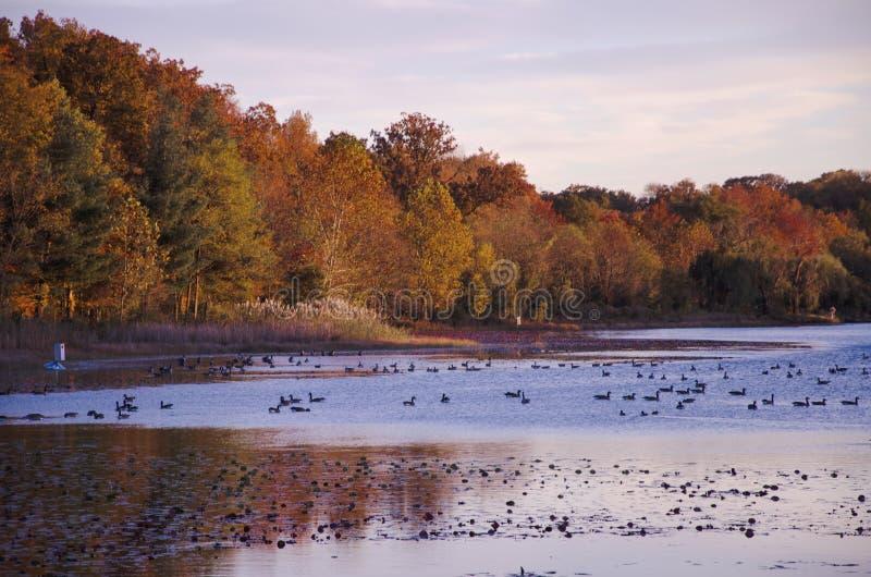 在湖附近的日落秋天的 免版税库存照片