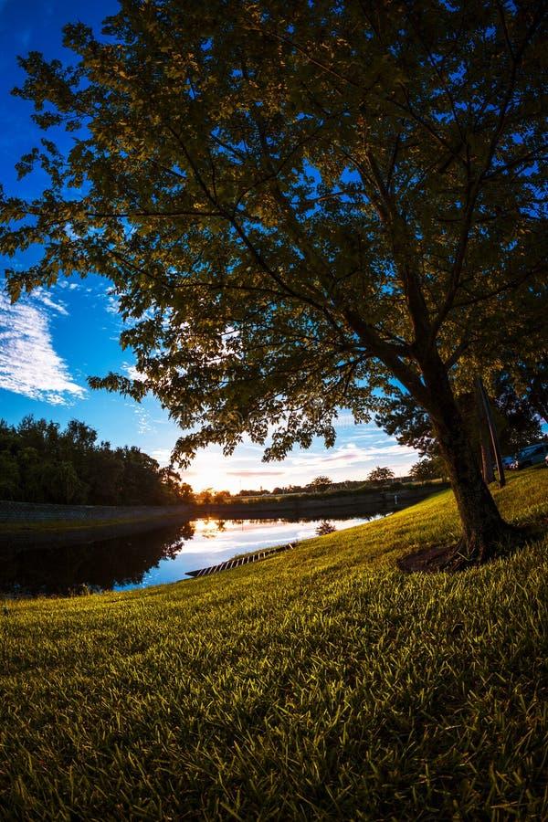 在湖附近的树型视图 免版税库存图片
