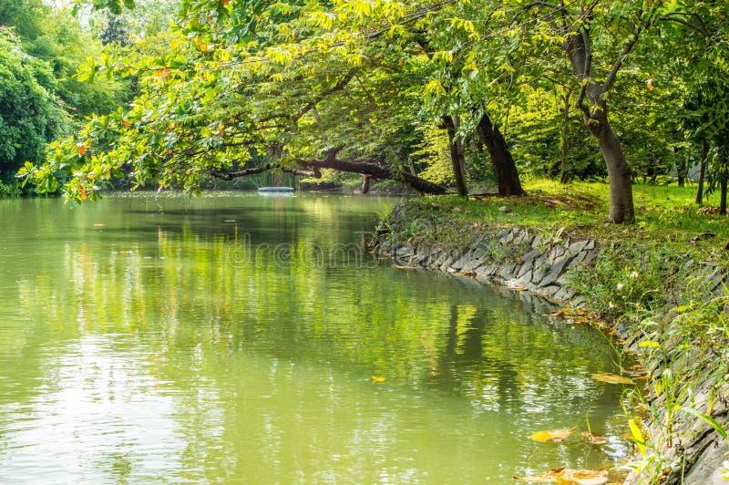在湖附近的树 免版税库存照片