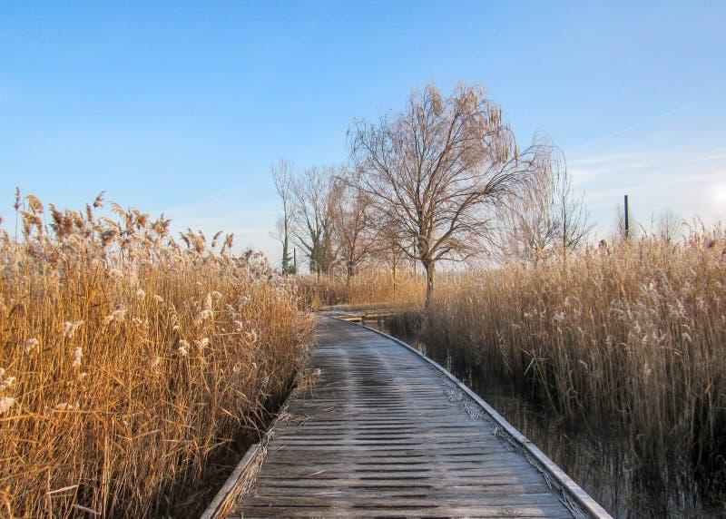 在湖附近的结冰的木码头走的方式道路,冬天在一个有雾的早晨 免版税图库摄影