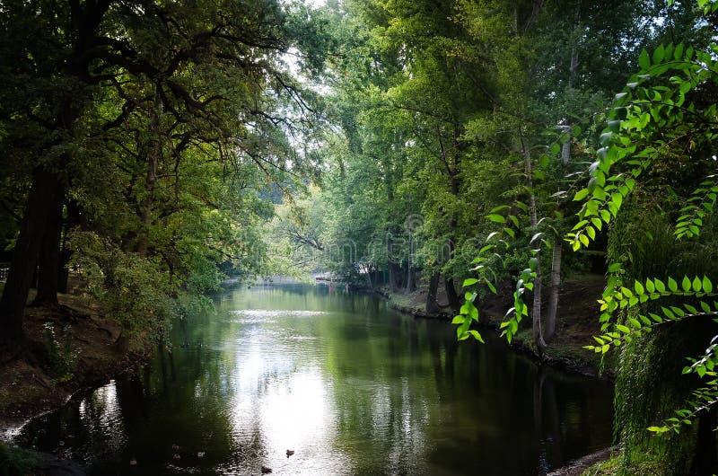 在湖附近的绿色树在公园 库存图片