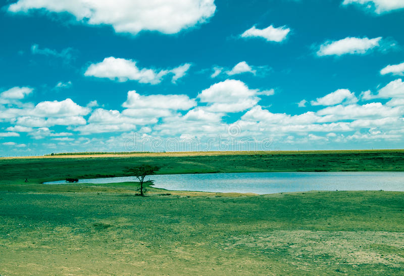 在湖附近的被定调子的图象孤立树大草原和天空的背景的 免版税库存照片