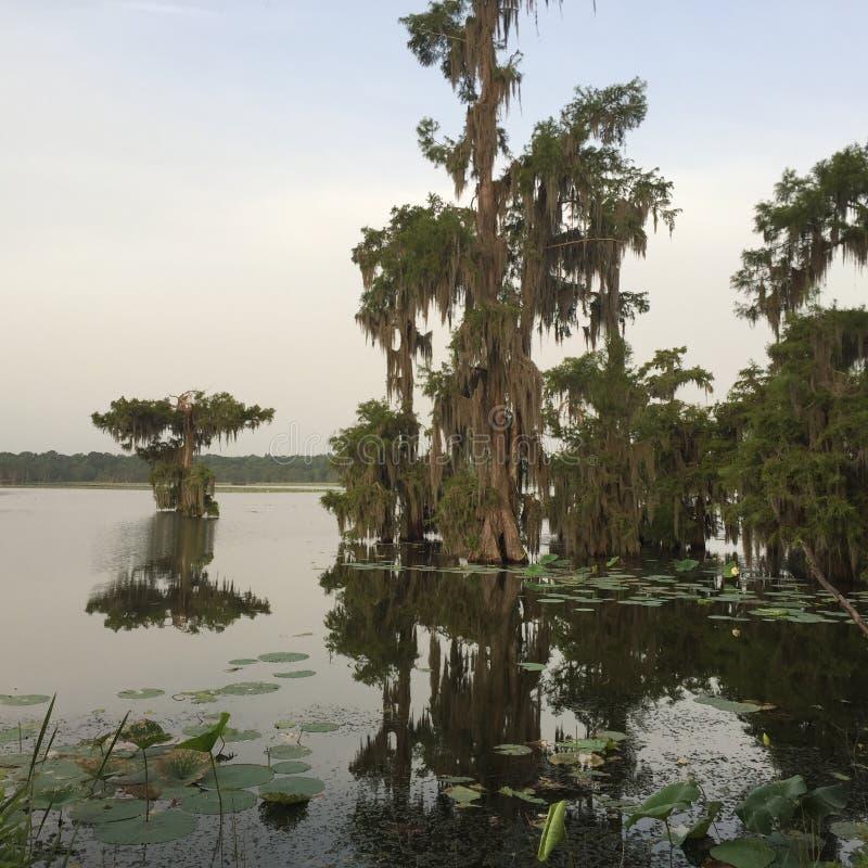 在湖马丁,在美丽的柏树中的路易斯安那放松 免版税库存照片